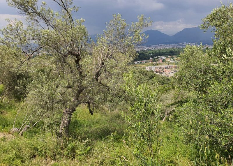 Toka per shitje ne kodrat e Liqenit te Tiranes